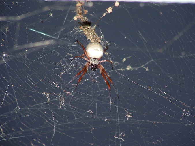 I love spiders...