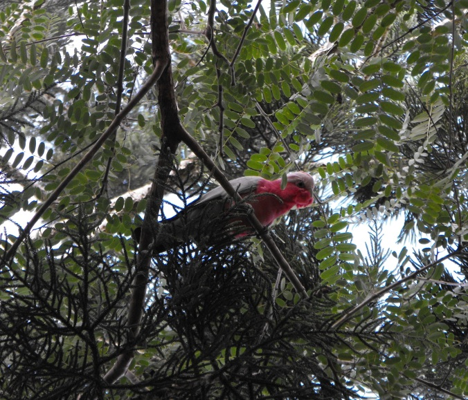 A noisy visitor above the tent.
