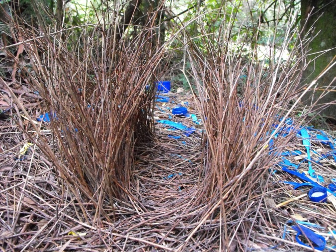 bower bird nest
