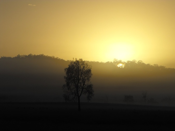 A foggy sunrise on the road to Hardings Paddock Picnic Grounds, Purga.