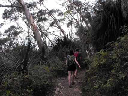 Grass tree path