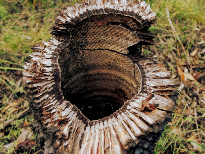 Hollow trunk