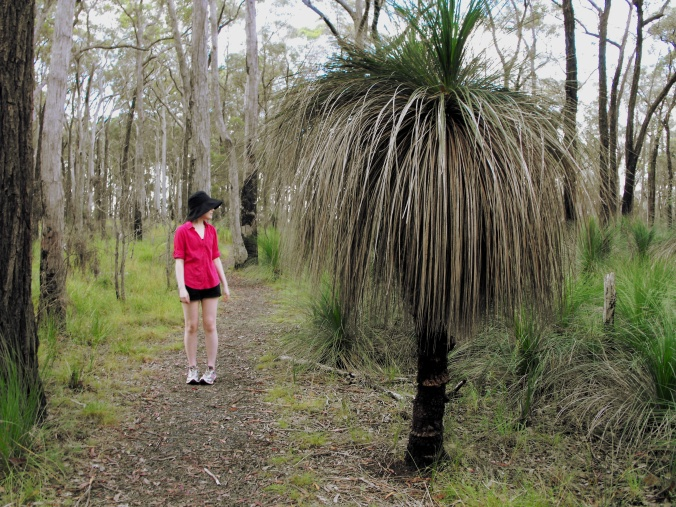 Large Grass Tree