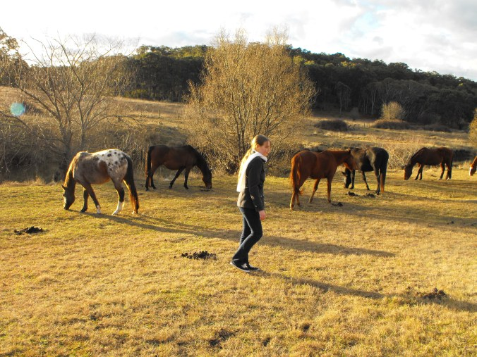 Horses at Three Waters Camping Grounds, Bullock Mountain.