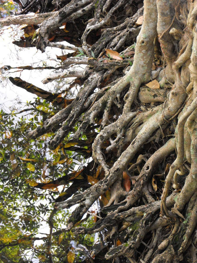tree-roots-water