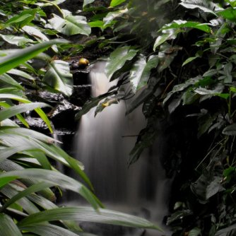 Waterfall - Mt Coot-tha - Gardens