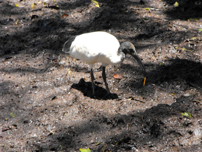 Ibis-wellington-point