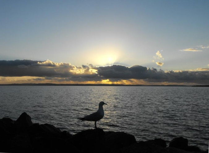 seagull-early-sunrise-wellington-point