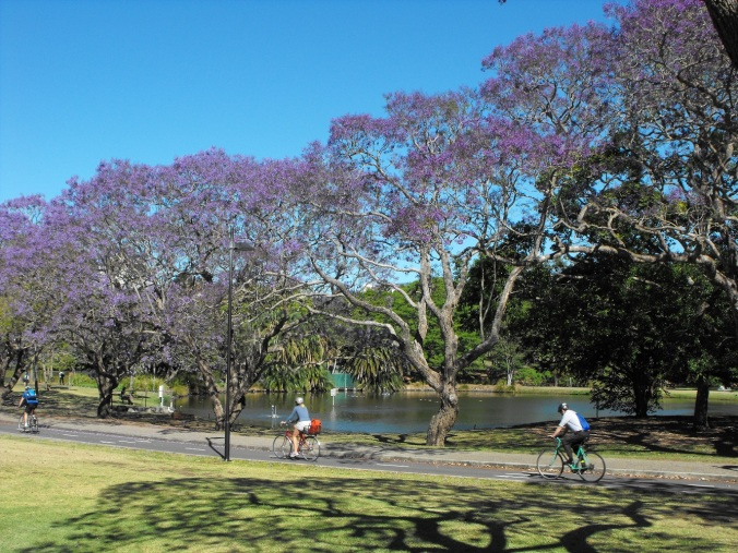 Cycling under the Jacarandas
