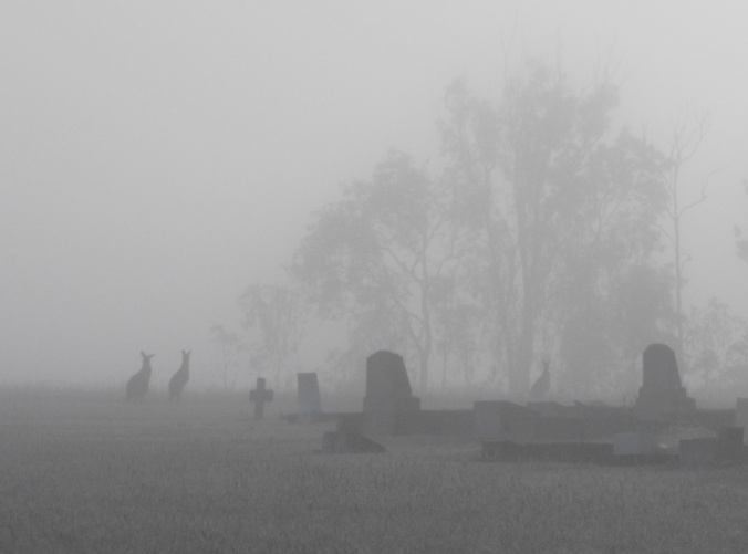 kangaroos in the mist