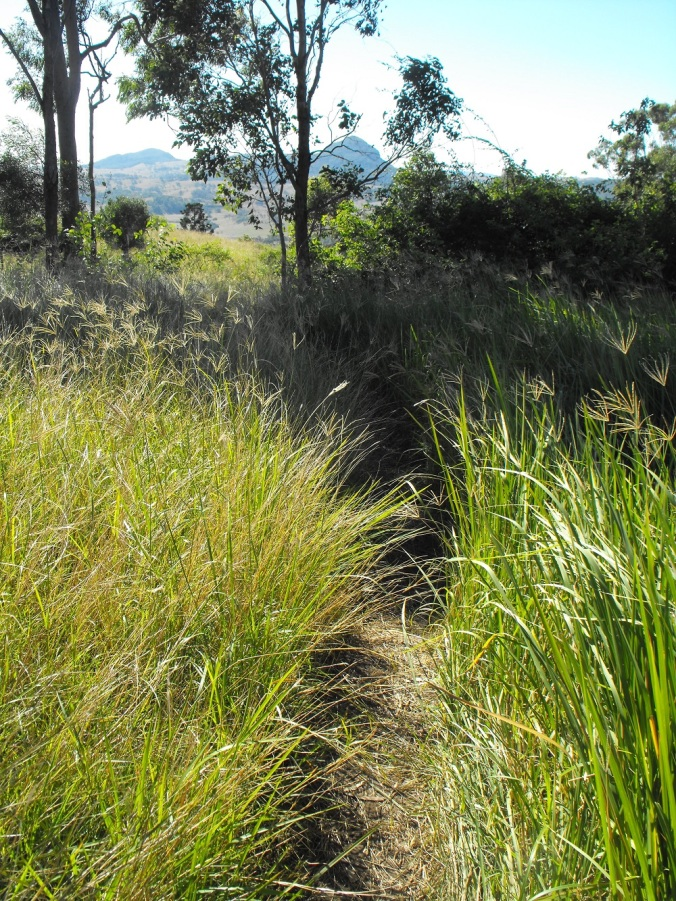 Grassy paths along Mt Maroon track