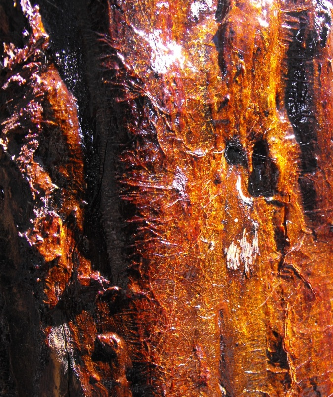 Resin on tree trunk
