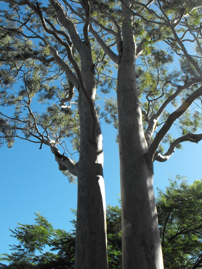 twin gums at Nerima Gardens