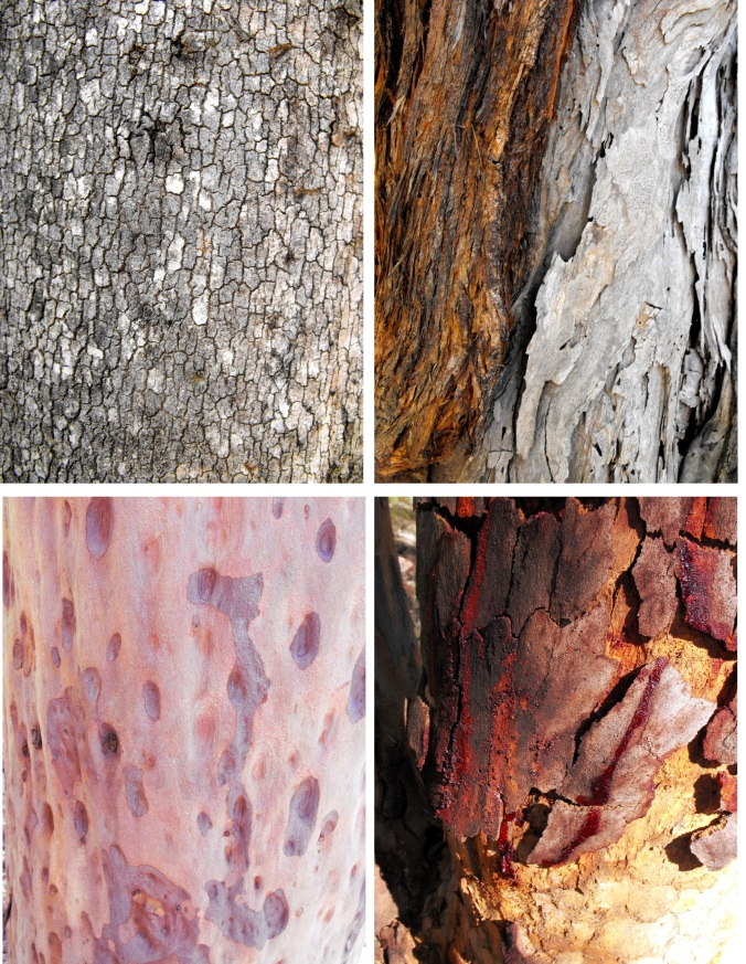 types of bark at Mt Maroon