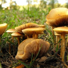 brown fungi Brisbane