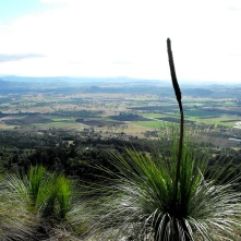grass tree view