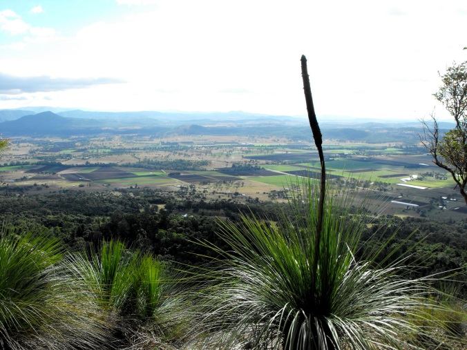 grass tree view a