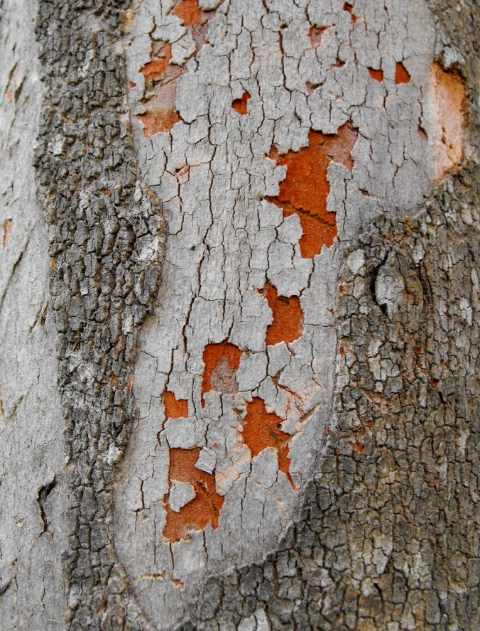 orange and grey bark castle hill