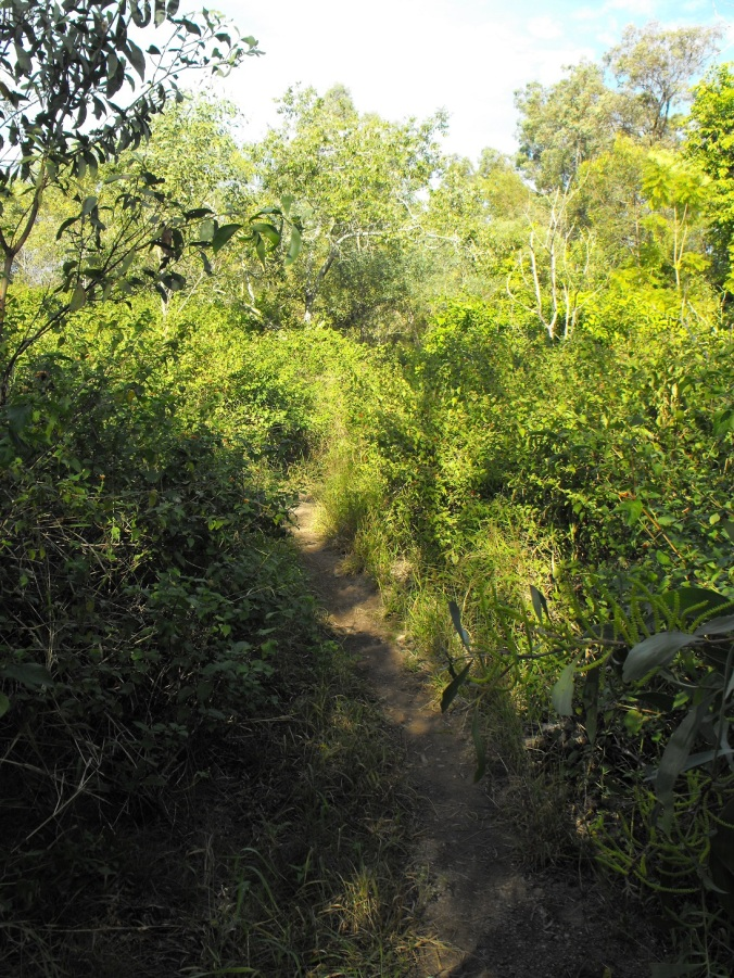 path through scrub