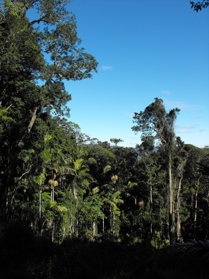open track view of rainforest