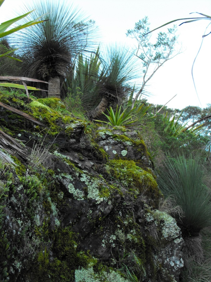 Rocky outcrops with plant growth Mt Cordeaux
