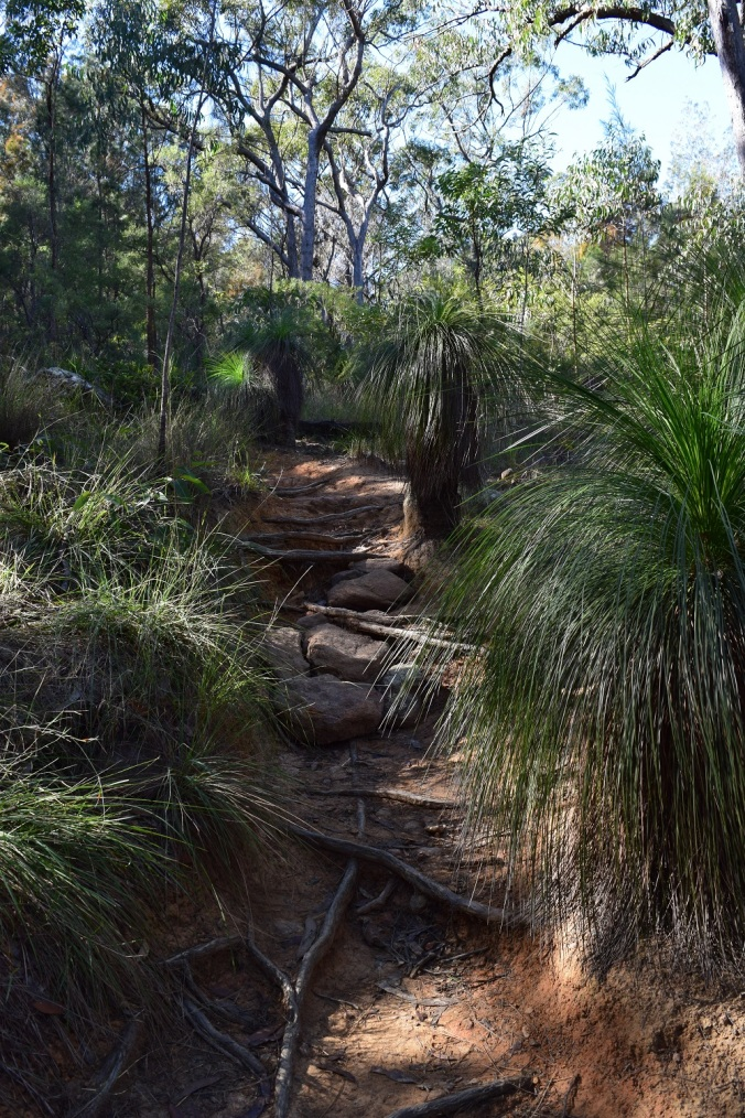 grass tree path 9