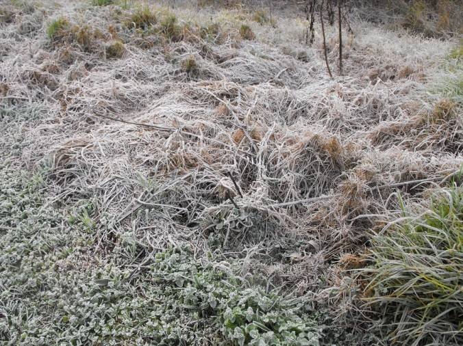 heavy frost Springbrook
