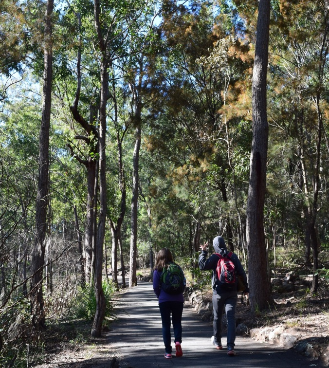 Tooheys Forest path