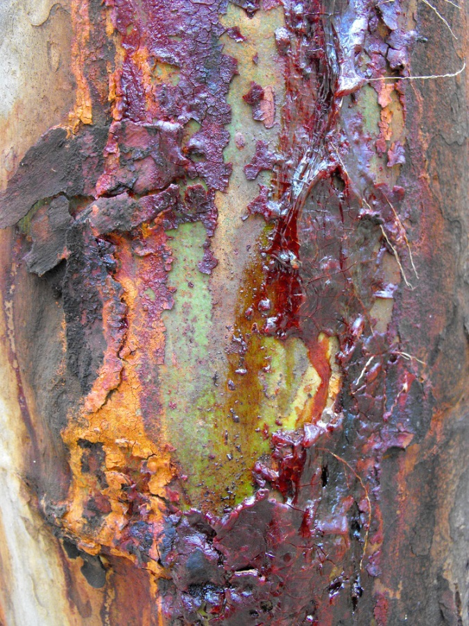 Cploured trunk with resin