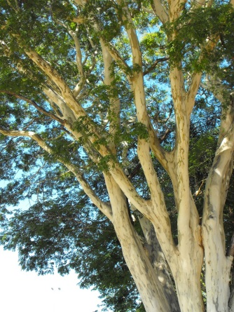 Leopard tree branches