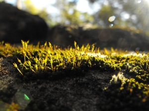 Moss at White Rock
