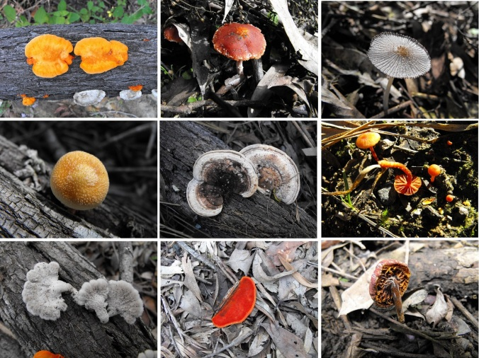 Fungi collection at White Rock