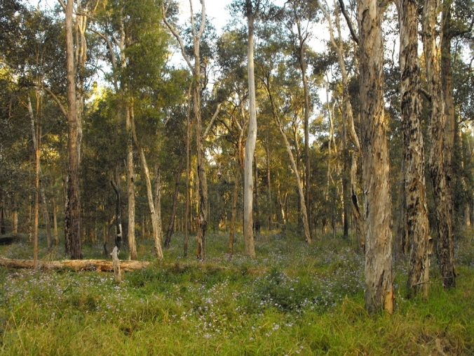 Paperbark Forest with flowers