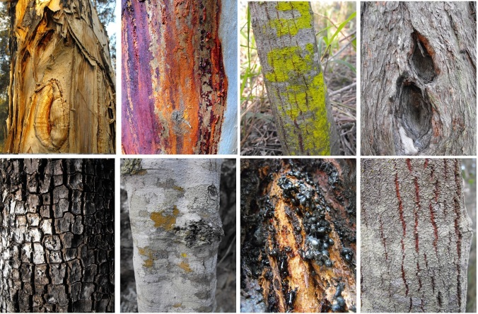 Tree bark collection at White Rock