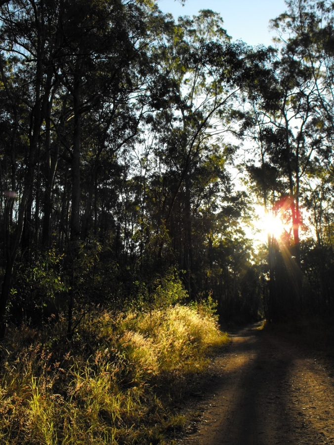 White Rock trail in afternoon light