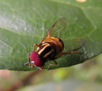 fly-on-leaf 3