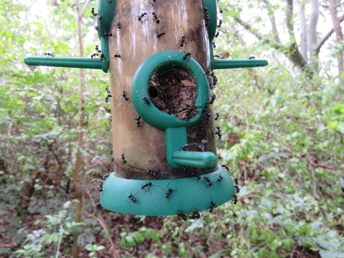 rattle-ants-in-birdfeeder