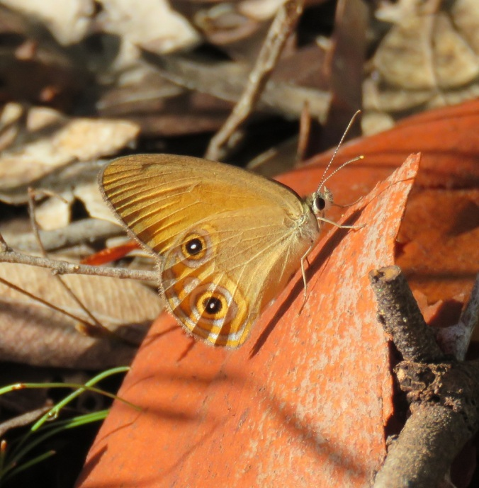 butterfly on red bark