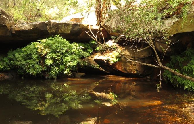 Fern Tree Pool - Cania Gorge