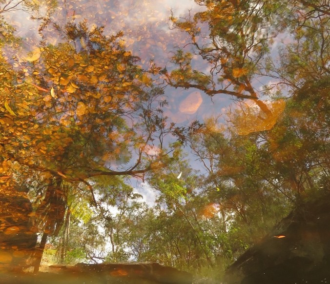 Fern Tree Pool Reflection - Cania Gorge