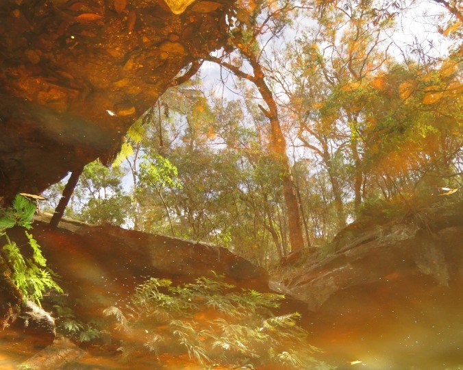 Fern Tree Pool reflections 3 - Cania Gorge