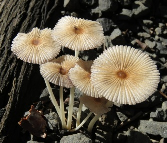 fungi clump - White Rock