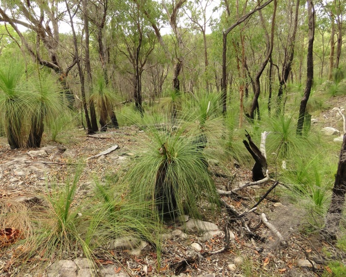 Giants Chair Walk - grass tree forest