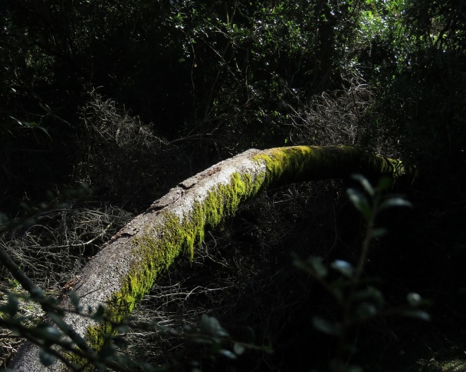 Mossy log - Cania Gorge
