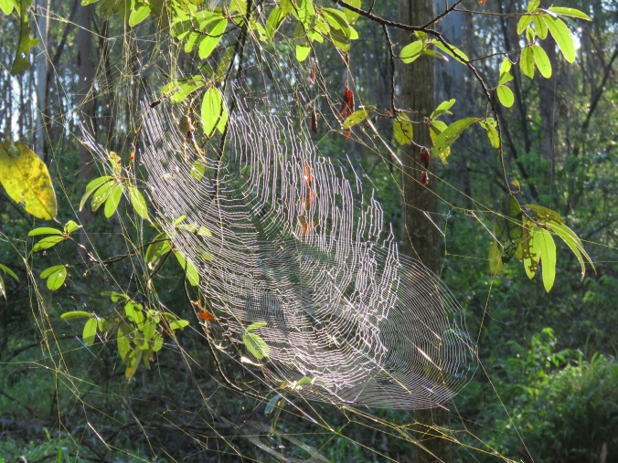 Orb-weaver web - White Rock