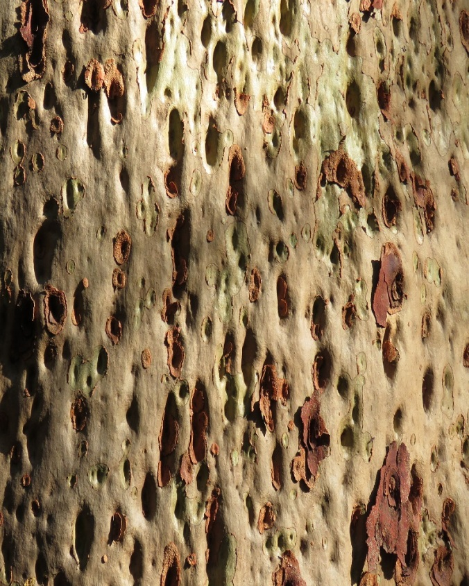 Tree trunk - cellulite