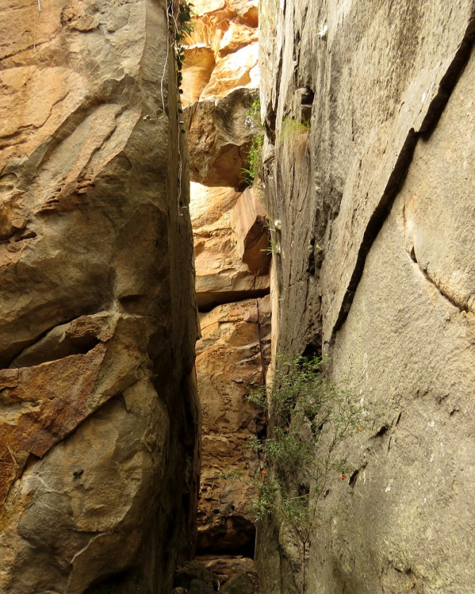 Two Storey Cave Track - King Orchids Cleft - Cania Gorge 1