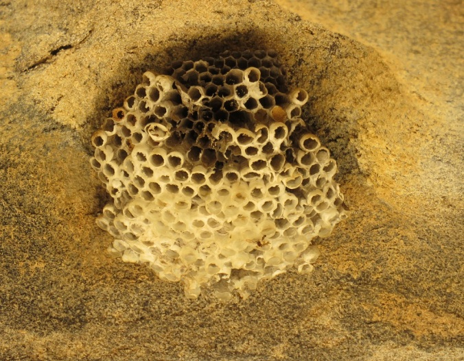 wasp nest - white rock