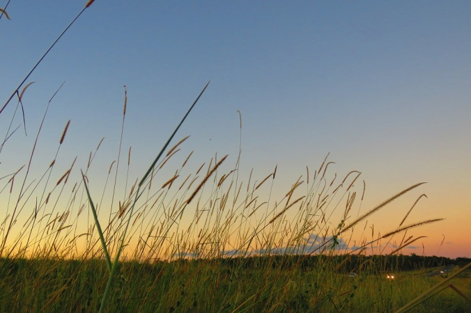 Grass seeds at sunset