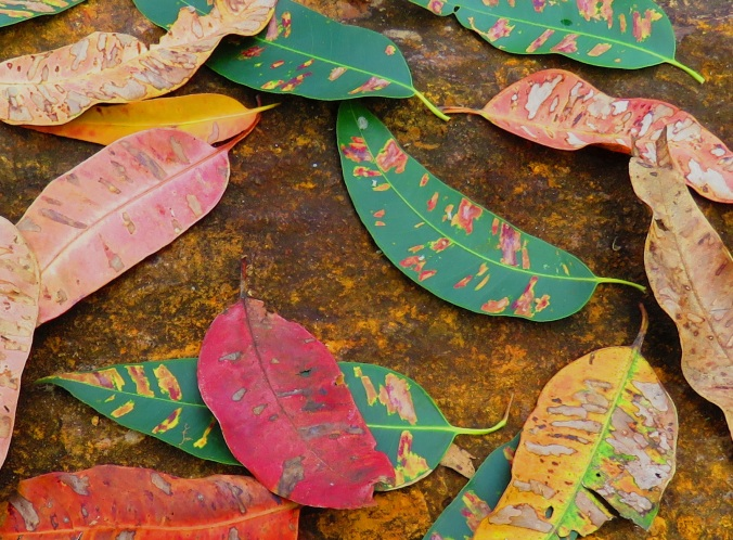 leaf patterns and colours
